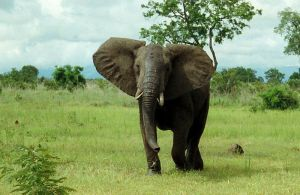 africanelephant_photographer-OliverWright